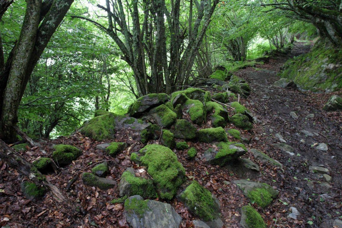 bosque del portet