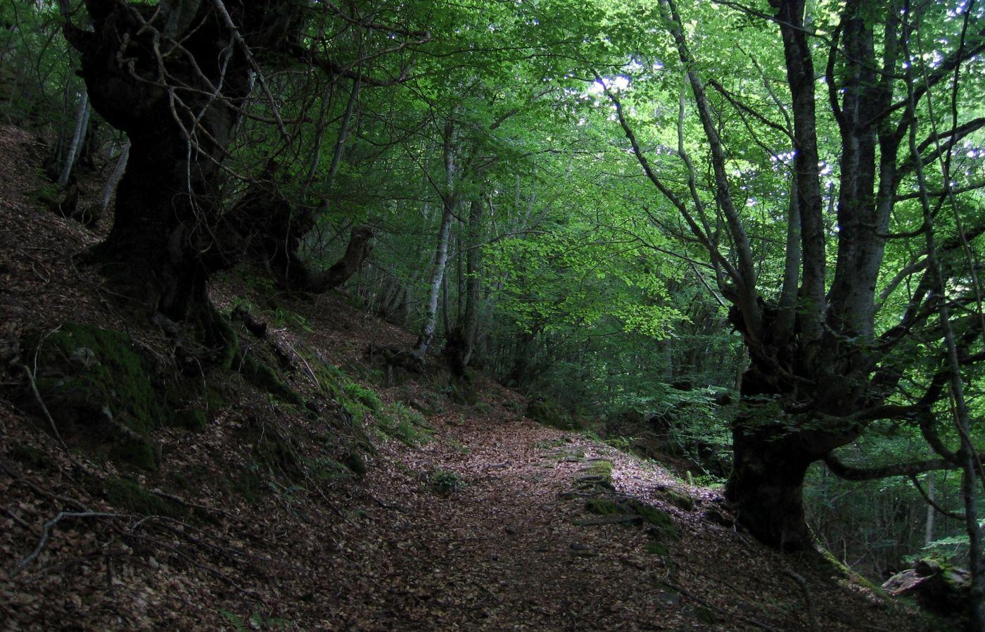 Bosque Portet
