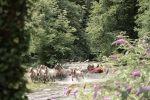 ¿Qué hacer en el Valle de Arán en verano?