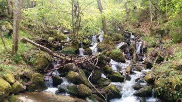 Agua en los bosques del valle de aran