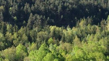 naturaleza valle de aran
