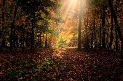 Planes de otoño