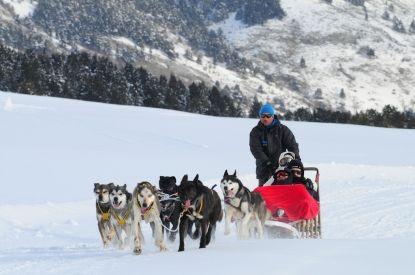 Excursiones en trineo con Huskies