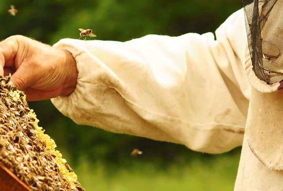 Top 5 productos típicos del valle de Arán