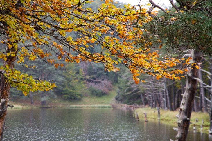 Bassa d'Oles en otoño