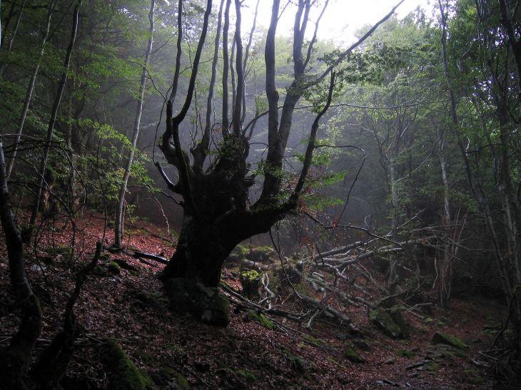 Bosque de Portet